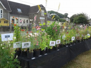 Plant stall 27th july